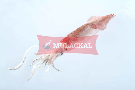 Patagonian Squid whole 10/20 1kg