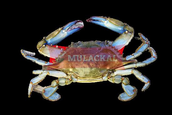 MULACKAL Blue Swimm Crab Cut 12x1kg